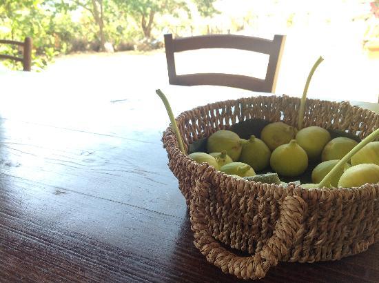 Agriturismo Le Case: Un po' di frutta colta dagli alberi vicini ...