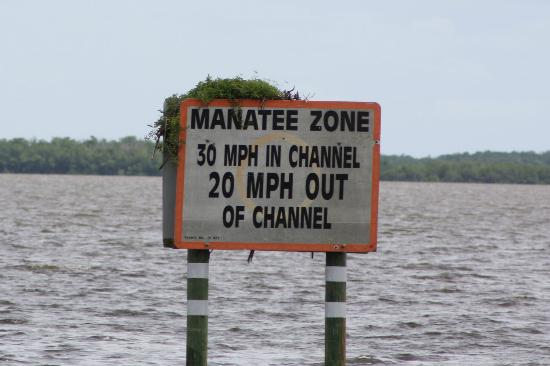 Gulf Coast Visitor Center: Manatee zone