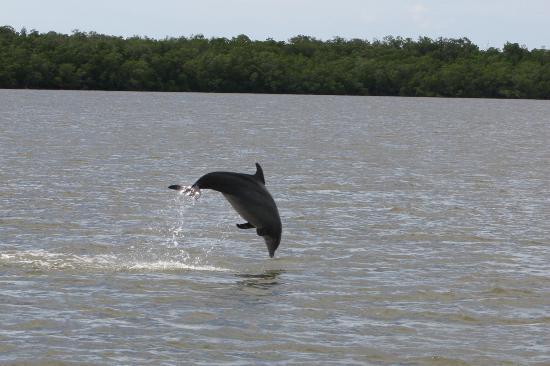 Gulf Coast Visitor Center: Dolphin shot on tour