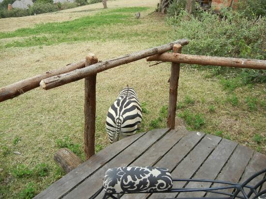 andBeyond Ngorongoro Crater Lodge: the zebras