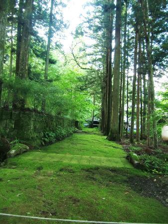 Kozenji Temple: 一面苔の絨毯