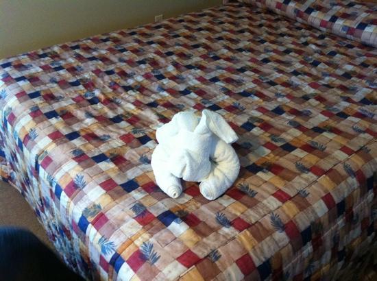 Cairns Motel: cairns towel art