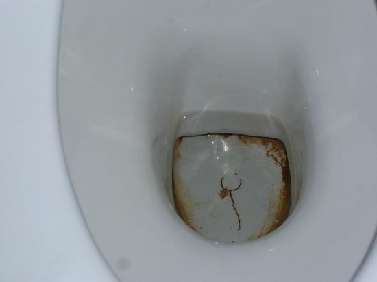 Les Maisons de la Mer: disgusting toilet