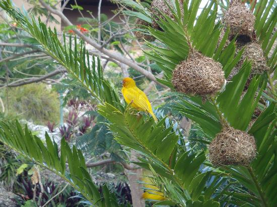 Neptune Pwani Beach Resort & Spa: yellow birds