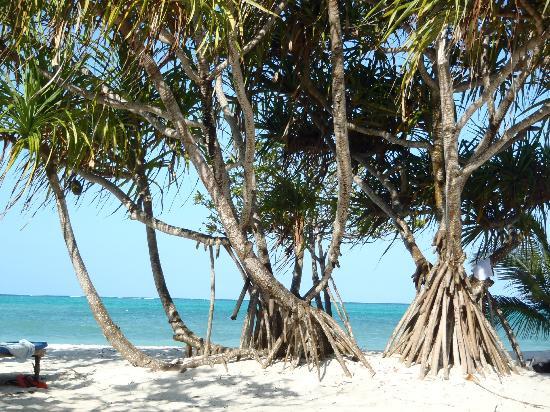 Neptune Pwani Beach Resort & Spa照片