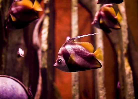 The Lost Chambers Aquarium: Fish in the aquarium