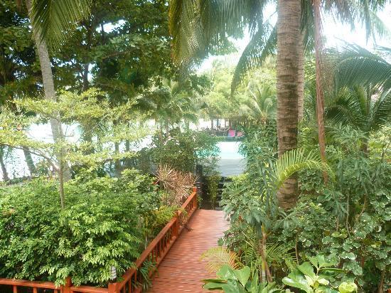 Salad Hut Bungalows : piscine vu de la chambre