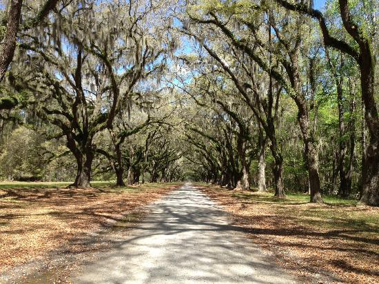 Wormsloe Historic Site : 1.5 mile entry with spanish moss