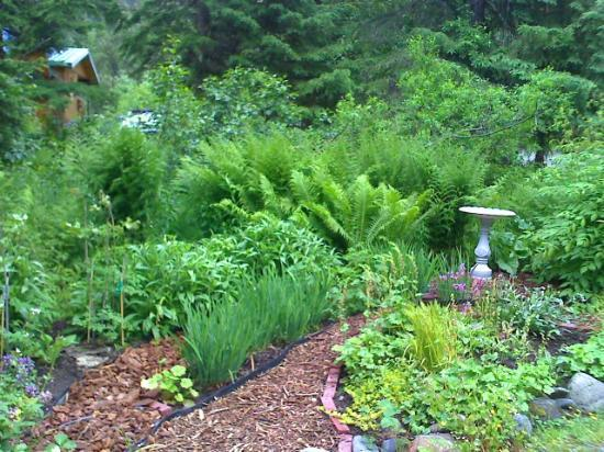 Girdwood Guest House: Side garden