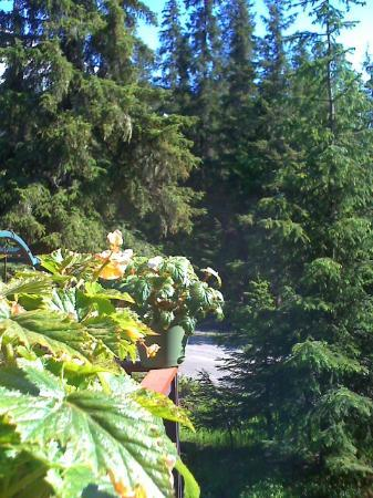 Girdwood Guest House: View from deck