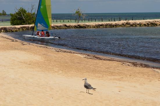 Hacienda Tres Rios: Playa