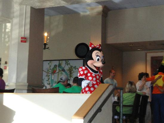 Buena Vista Palace: adivinha quem veio para o café da manhã?