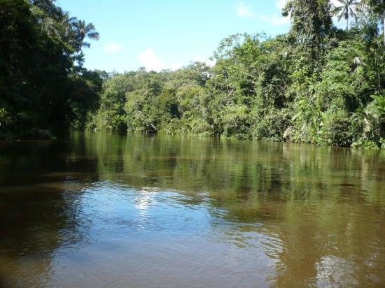 Amazon Jungle Tours Tripadvisor