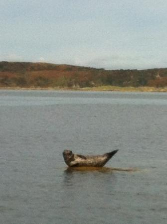 The Kilberry Inn : watch out for the seals on the way in