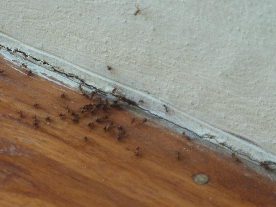 Hotel Casa Chameleon: Ultra Villa; ants galore.