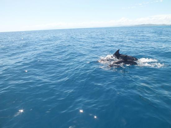 Malolo Island Resort: the dolphin safari was excellent
