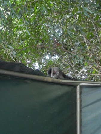 andBeyond Kichwa Tembo Tented Camp: the mischevious monkey!