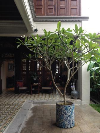 Noordin Mews: Frangipani tree in the courtyard.