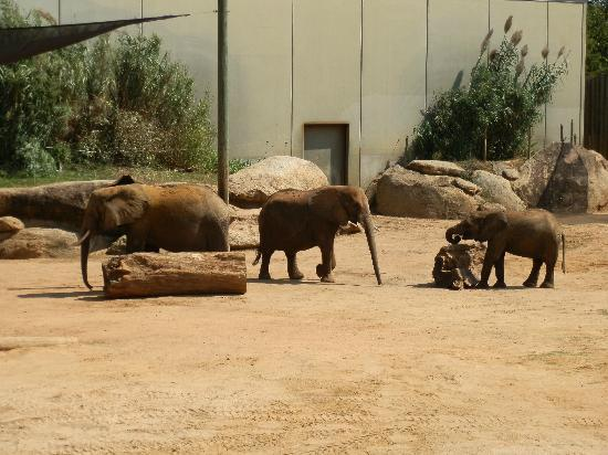Montgomery, AL: Elephant exhibit