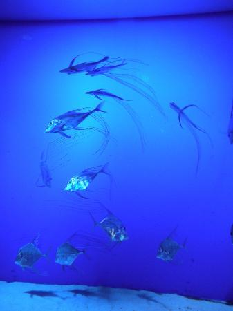 Sea Life Melbourne Aquarium: Melbourne Aquarium