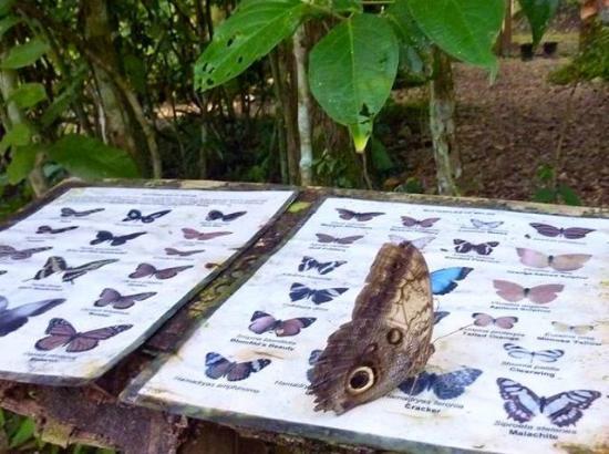 The Trek Stop: Butterfly enclosure