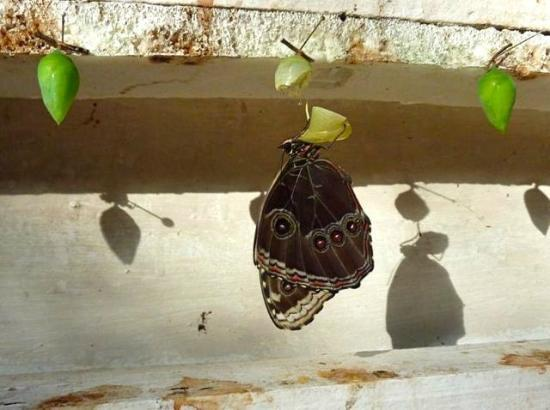 The Trek Stop: Hatching butterfly