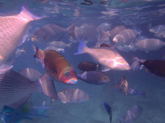 Sun Island Resort: Fishes