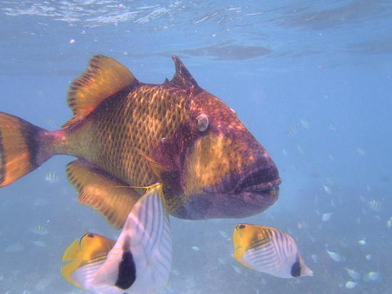 Sun Island Resort and Spa: Big ugly fish :)