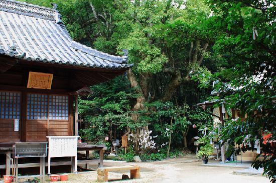 Tai Hachimangu