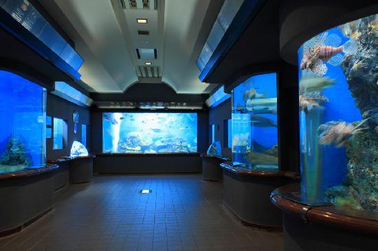渋川マリン水族館 (玉野市立海洋博物館)