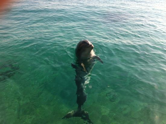 Dolphin Reef : friendly dolphin