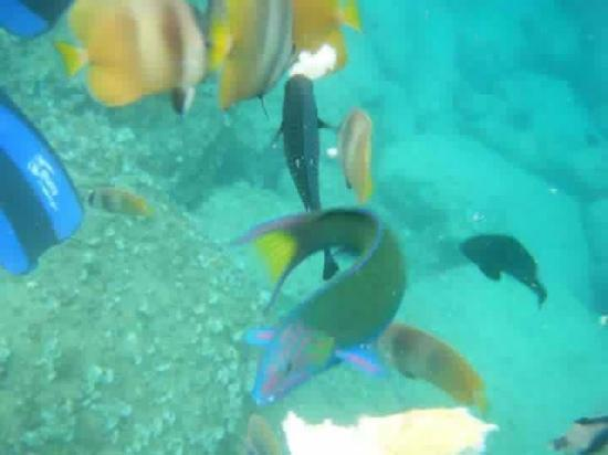 Bellarocca Island Resort and Spa: we fed the fishies