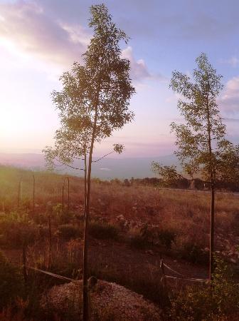 Kibbutz Lavi Hotel: View