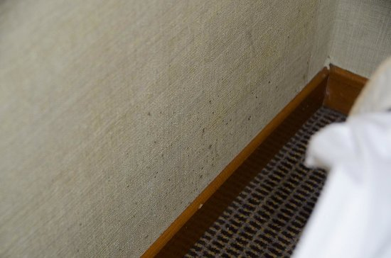 Astor Hotel Athens: Mold or bed bug spots on the wall - bed level.