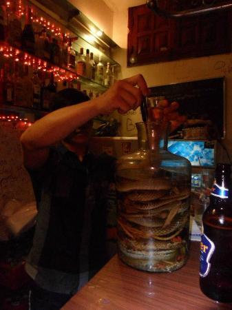 Central Backpackers Hostel - Original : snake wine!