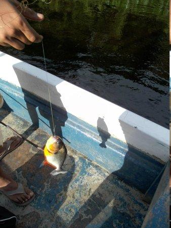 Boral Camp: Piranhas fischen
