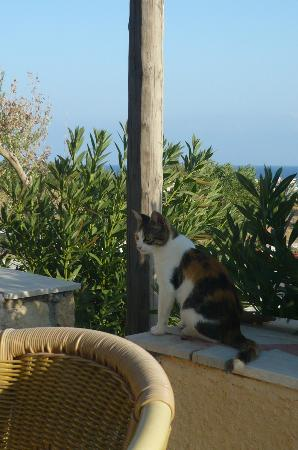 Nicolas Apartments : view from the terrace, with one of the cats of the house