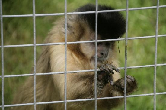 The Monkey Sanctuary : Monkey Sanctuary, Looe