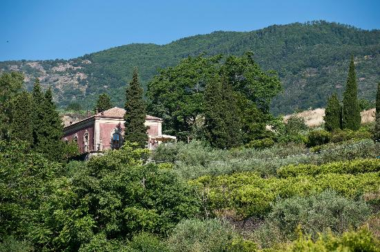 Zafferana Etnea, İtalya: Part of the Estate