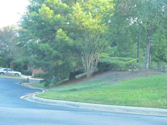 Hawthorn Suites by Wyndham Raleigh: can you see the hotel?