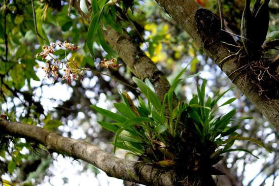 Hacienda Cusin : gardens