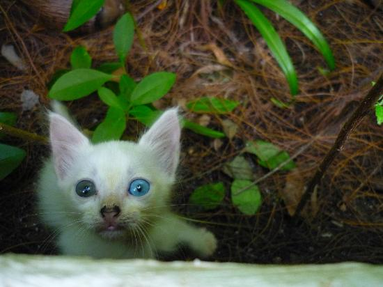 Biyadhoo Island Resort : kitten