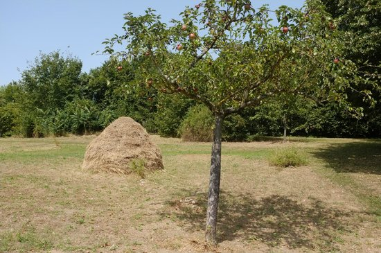 Giverny, Frankrike: Au jardin