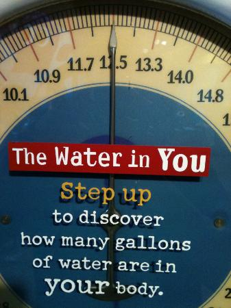Marbles Kids Museum: The Water In You