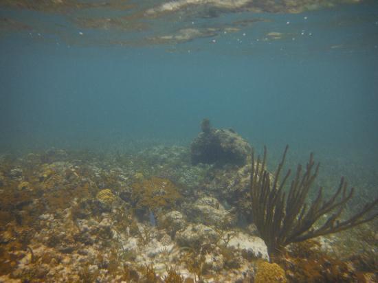 Atlantic Ocean Beach Villas: reef