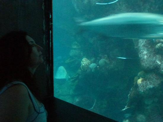 Giant Ocean Tank Picture Of New England Aquarium Boston Tripadvisor