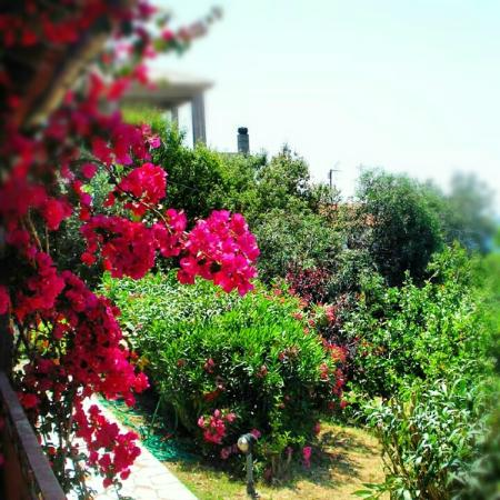 Villa Anna: the bougainvilia outside our room
