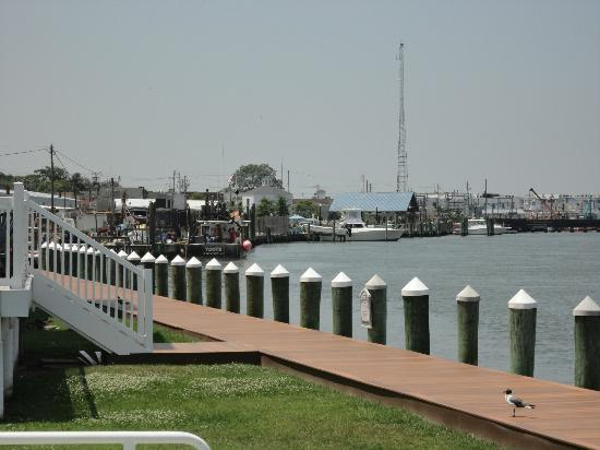Comfort Suites Chincoteague: View from the back of the hotel!