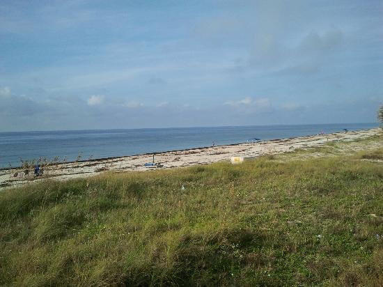 Buccaneer Inn: Seaweed all down the beach