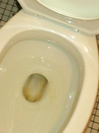 Bradford Inn & Suites: Dirty toilet upon check-in. Classy joint.